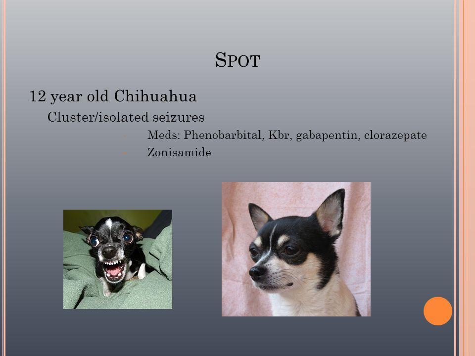 S POT 12 year old Chihuahua Cluster/isolated seizures Meds: Phenobarbital, Kbr, gabapentin, clorazepate Zonisamide