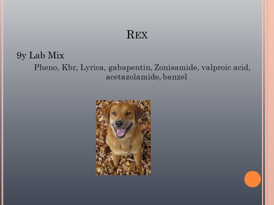 R EX 9y Lab Mix Pheno, Kbr, Lyrica, gabapentin, Zonisamide, valproic acid, acetazolamide, banzel