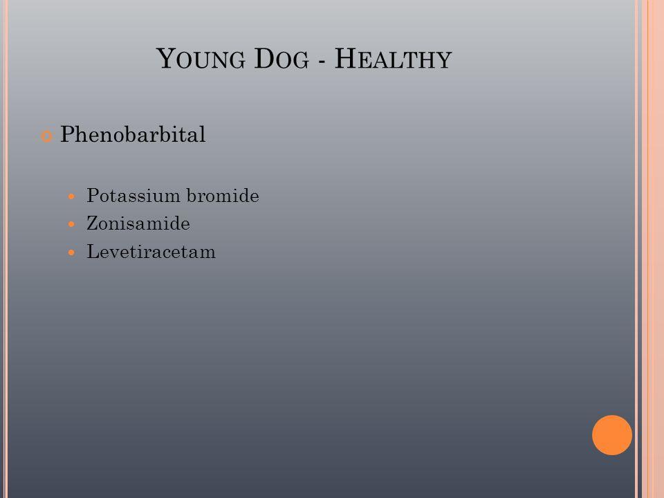 Y OUNG D OG - H EALTHY Phenobarbital Potassium bromide Zonisamide Levetiracetam
