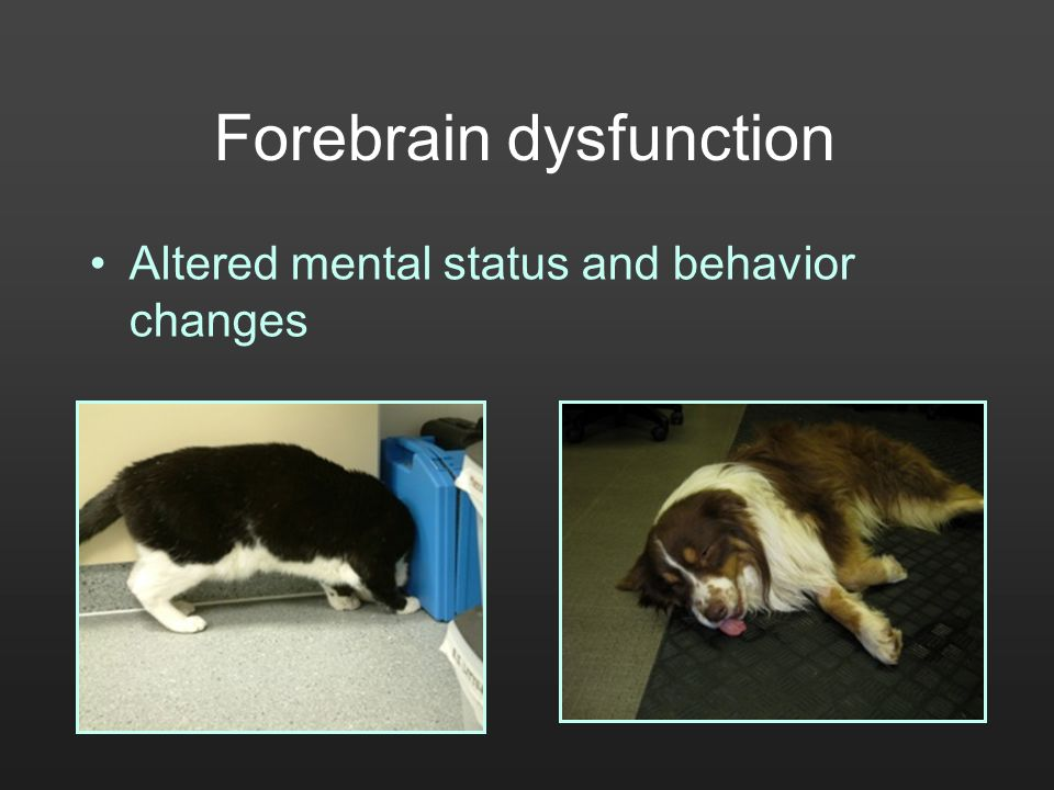 Forebrain dysfunction Altered mental status and behavior changes