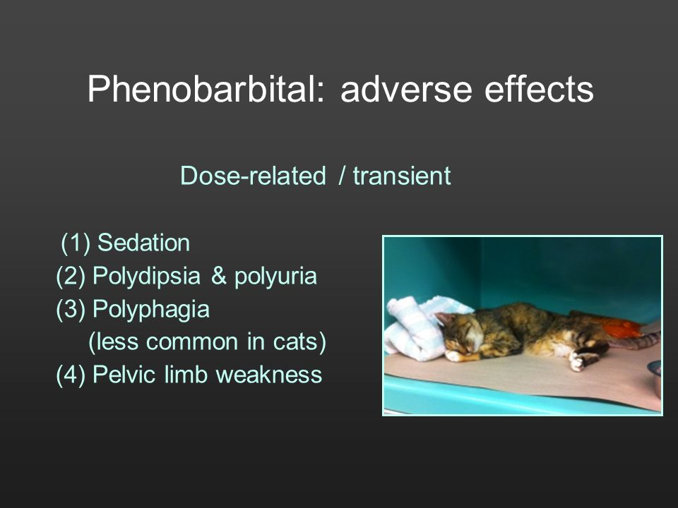 Phenobarbital: adverse effects Dose-related / transient (1) Sedation (2) Polydipsia & polyuria (3) Polyphagia (less common in cats) (4) Pelvic limb we