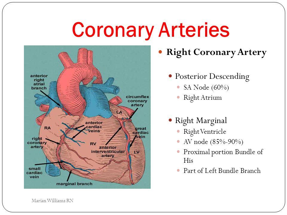 Coronary Arteries Right Coronary Artery Posterior Descending SA Node (60%) Right Atrium Right Marginal Right Ventricle AV node (85%-90%) Proximal port