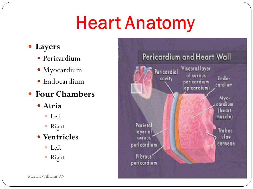 Heart Anatomy Layers Pericardium Myocardium Endocardium Four Chambers Atria Left Right Ventricles Left Right Marian Williams RN