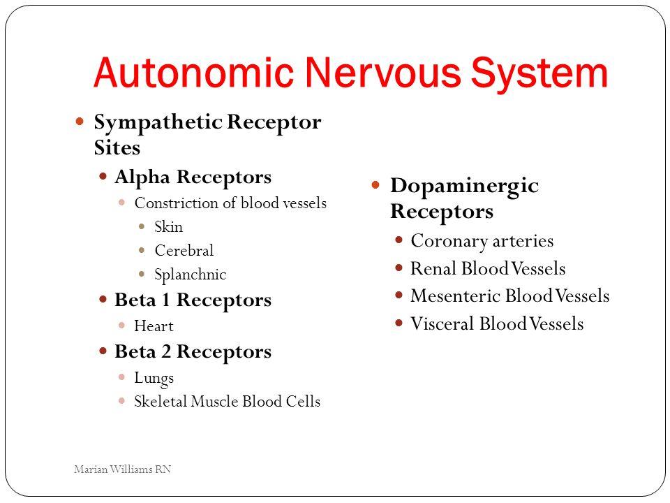 Autonomic Nervous System Sympathetic Receptor Sites Alpha Receptors Constriction of blood vessels Skin Cerebral Splanchnic Beta 1 Receptors Heart Beta