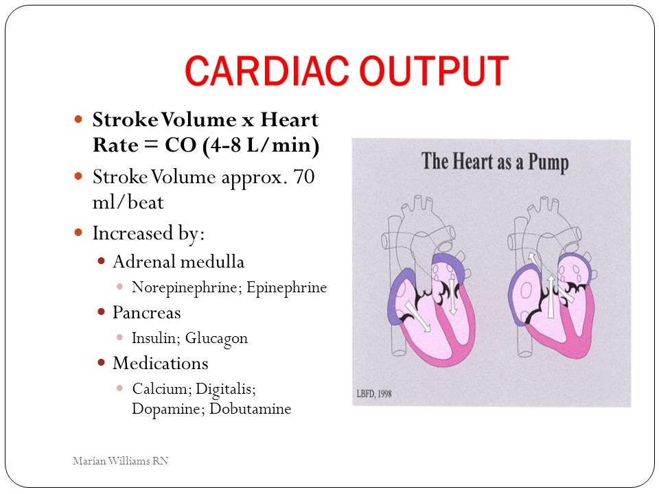 CARDIAC OUTPUT Stroke Volume x Heart Rate = CO (4-8 L/min) Stroke Volume approx. 70 ml/beat Increased by: Adrenal medulla Norepinephrine; Epinephrine