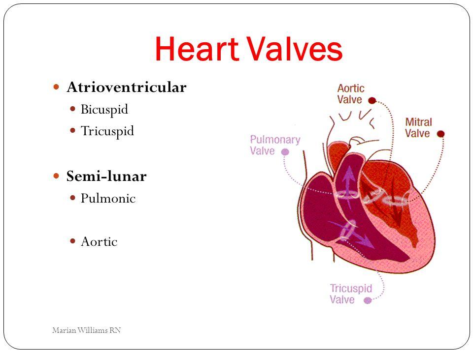 Heart Valves Atrioventricular Bicuspid Tricuspid Semi-lunar Pulmonic Aortic Marian Williams RN