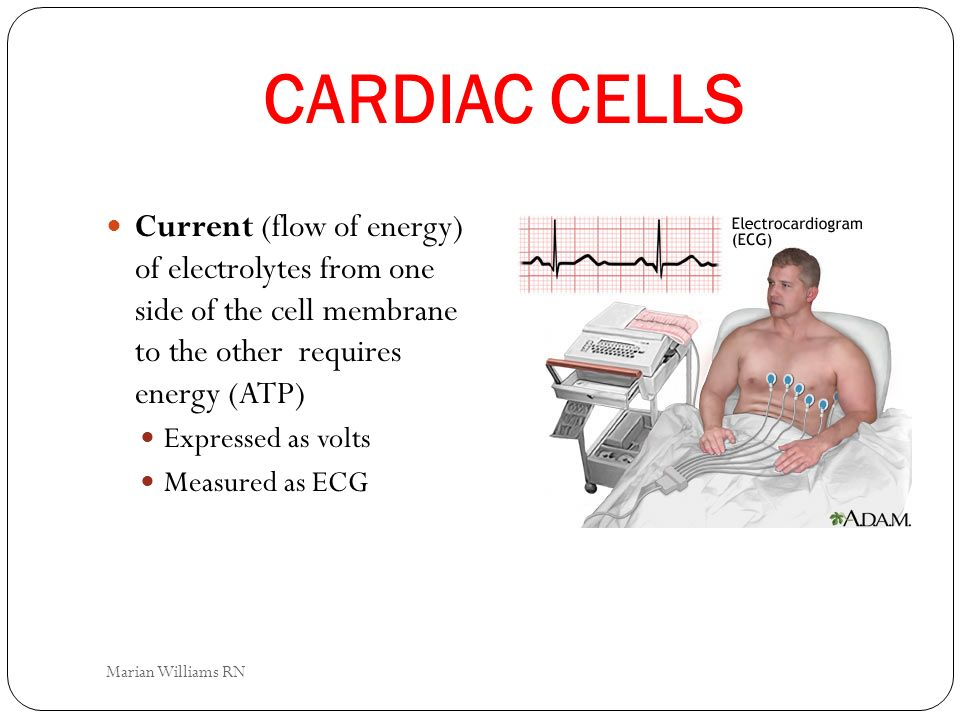 CARDIAC CELLS Current (flow of energy) of electrolytes from one side of the cell membrane to the other requires energy (ATP) Expressed as volts Measur