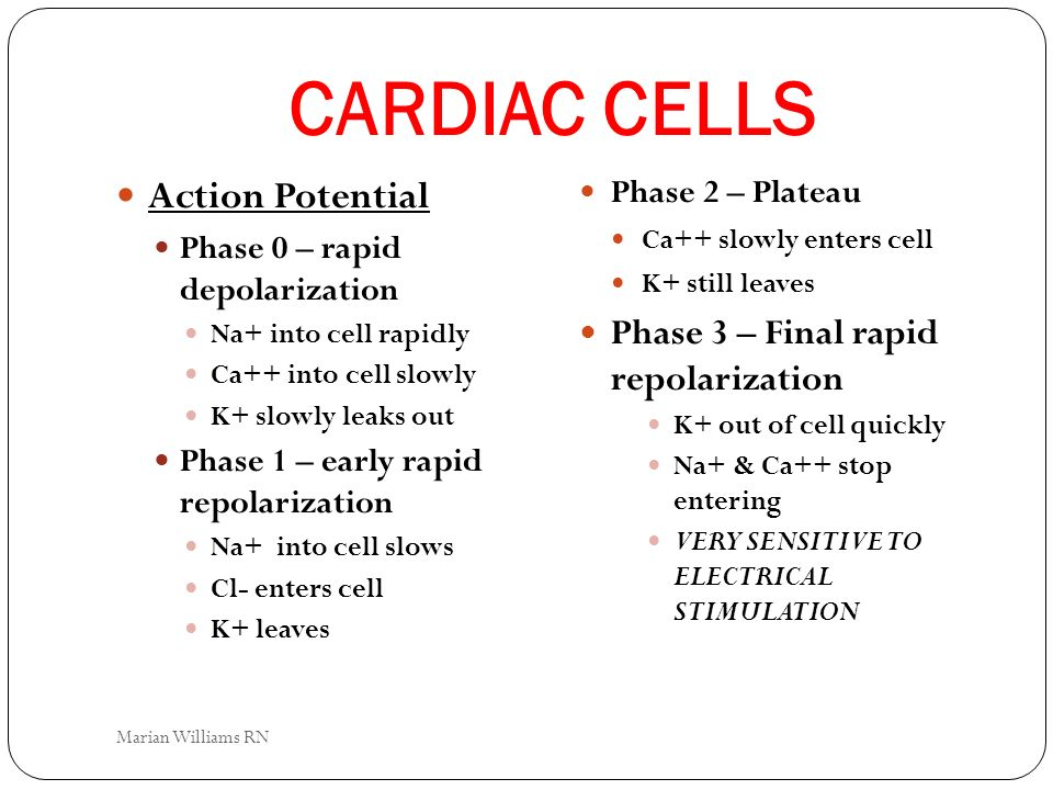 CARDIAC CELLS Action Potential Phase 0 – rapid depolarization Na+ into cell rapidly Ca++ into cell slowly K+ slowly leaks out Phase 1 – early rapid re