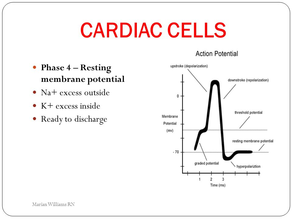 CARDIAC CELLS Phase 4 – Resting membrane potential Na+ excess outside K+ excess inside Ready to discharge Marian Williams RN