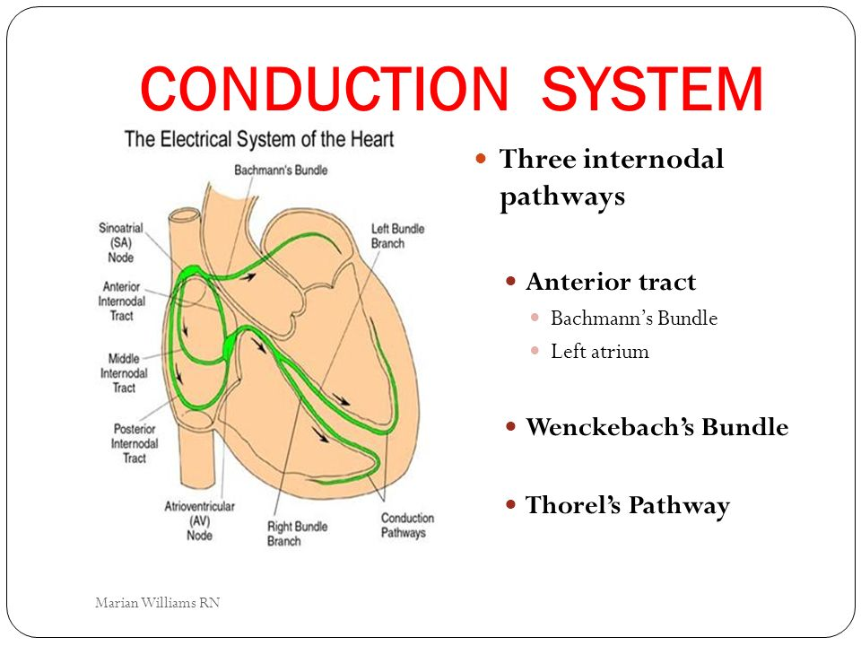 CONDUCTION SYSTEM Three internodal pathways Anterior tract Bachmanns Bundle Left atrium Wenckebachs Bundle Thorels Pathway Marian Williams RN