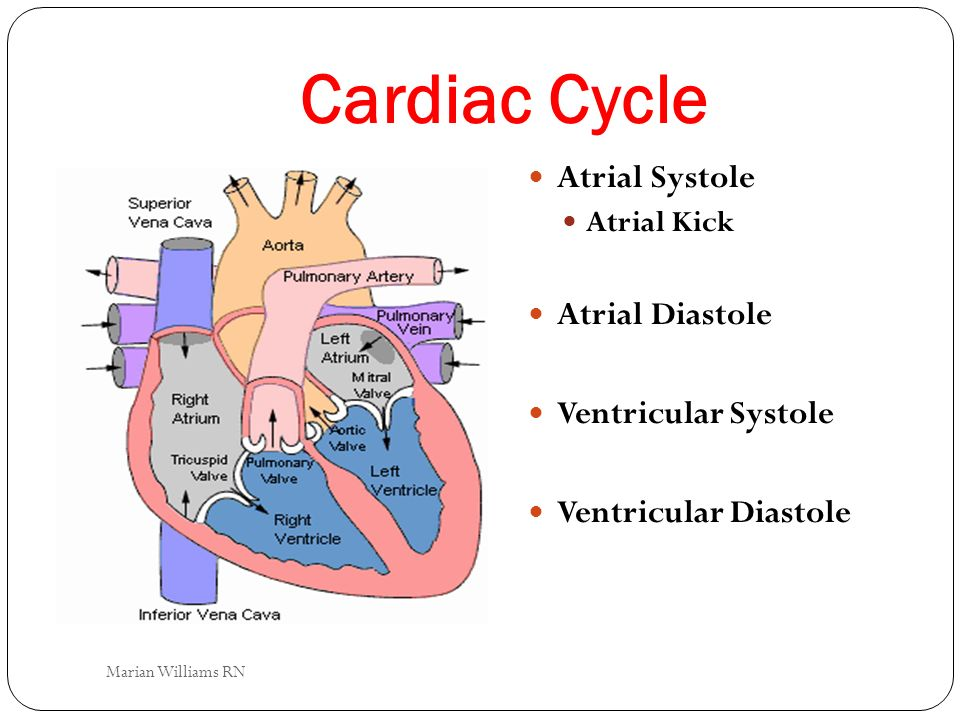 Cardiac Cycle Atrial Systole Atrial Kick Atrial Diastole Ventricular Systole Ventricular Diastole Marian Williams RN