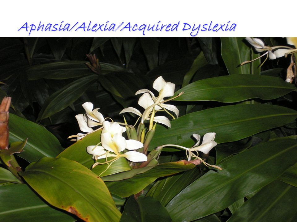 All Rights ReservedKevin T. Blake, Ph.D., P.L.C.47 Aphasia/Alexia/Acquired Dyslexia