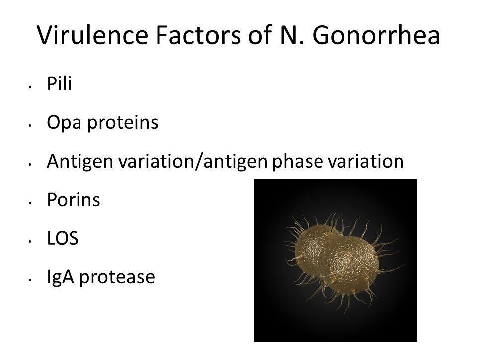 Virulence Factors of N. Gonorrhea Pili Opa proteins Antigen variation/antigen phase variation Porins LOS IgA protease