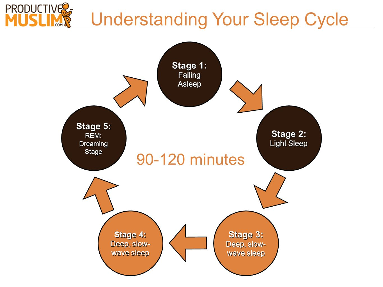 Understanding Your Sleep Cycle Stage 1: Falling Asleep Stage 2: Light Sleep Stage 3: Deep, slow- wave sleep Stage 4: Deep, slow- wave sleep Stage 5: R