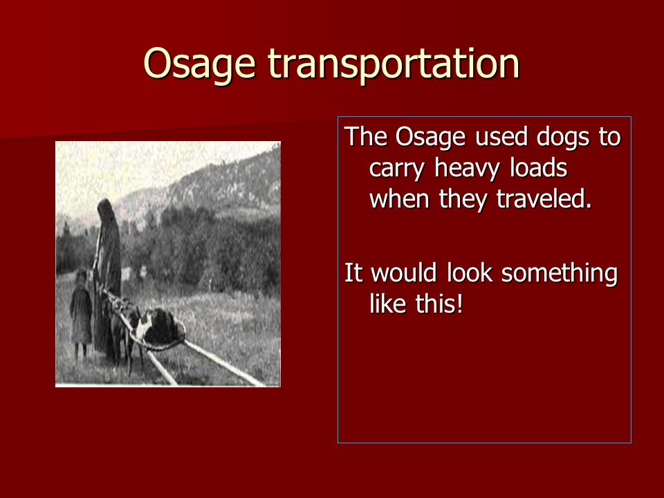 Osage transportation The Osage used dogs to carry heavy loads when they traveled. It would look something like this!