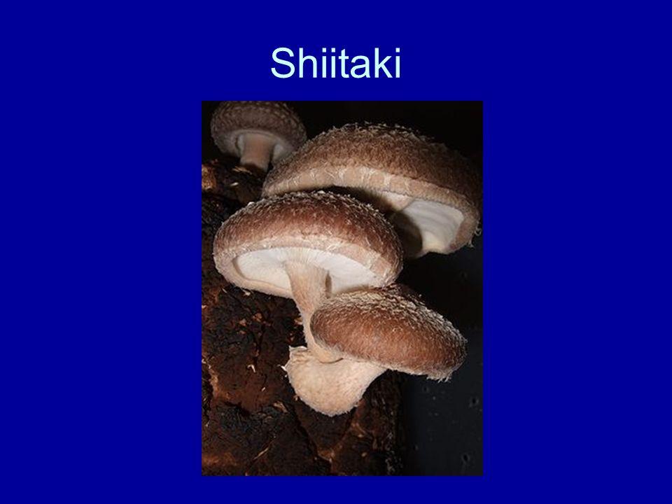Shiitaki