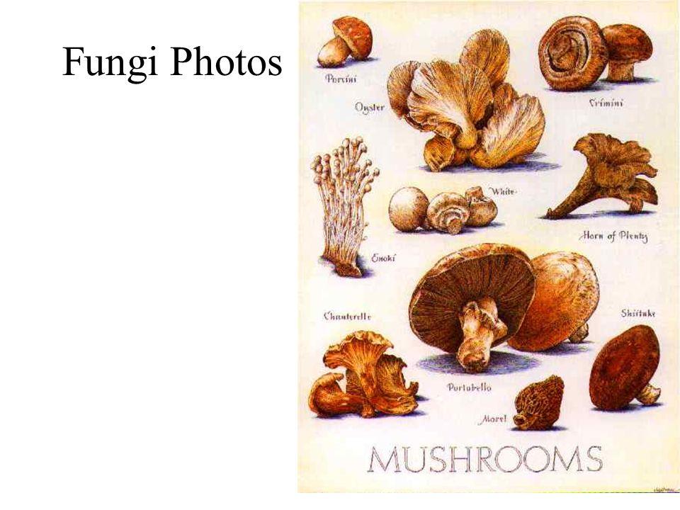 Fungi Photos