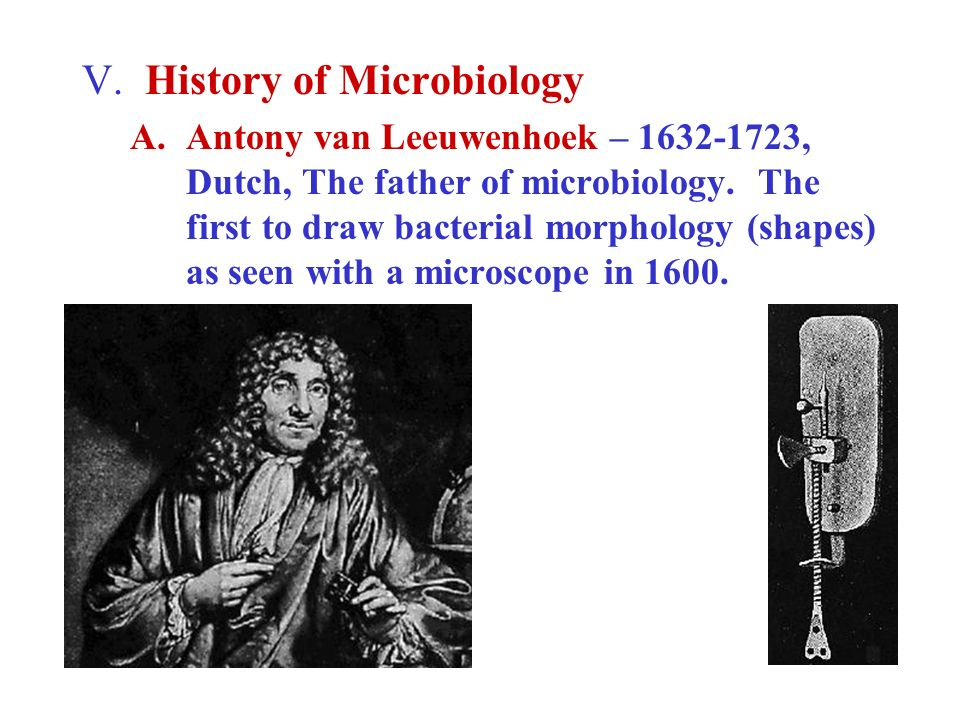V. History of Microbiology A.Antony van Leeuwenhoek – 1632-1723, Dutch, The father of microbiology. The first to draw bacterial morphology (shapes) as