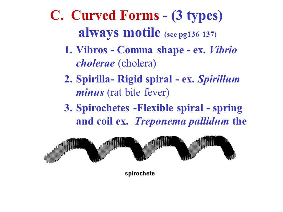 C. Curved Forms - (3 types) always motile (see pg136-137) 1.Vibros - Comma shape - ex. Vibrio cholerae (cholera) 2.Spirilla- Rigid spiral - ex. Spiril