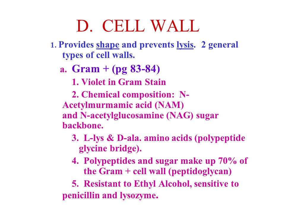 D. CELL WALL 1. Provides shape and prevents lysis. 2 general types of cell walls. a. Gram + (pg 83-84) 1. Violet in Gram Stain 2. Chemical composition