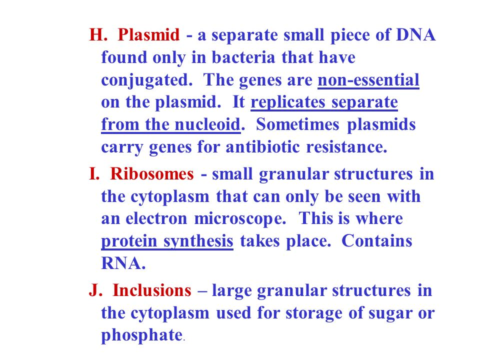 H. Plasmid - a separate small piece of DNA found only in bacteria that have conjugated. The genes are non-essential on the plasmid. It replicates sepa