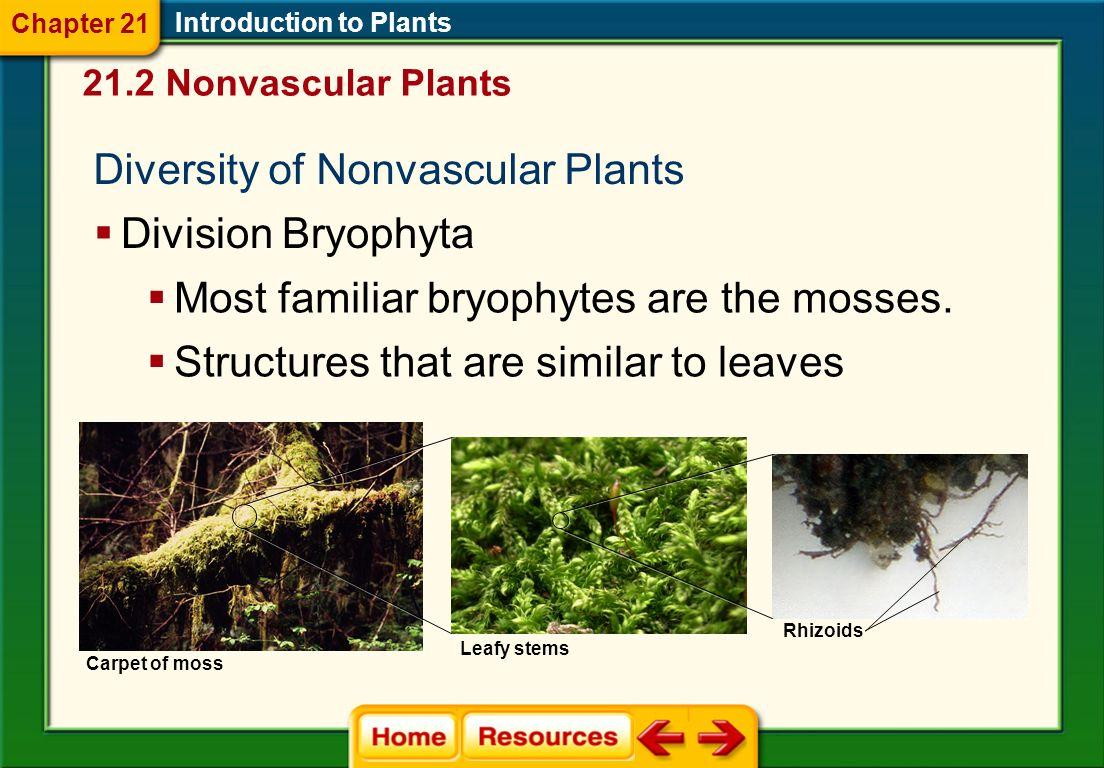 Introduction to Plants Seed-producing Vascular Plants Cycadophytes Gnetophytes Ginkgophytes Coniferophytes Anthophytes 21.1 Plant Evolution and Adaptations Chapter 21