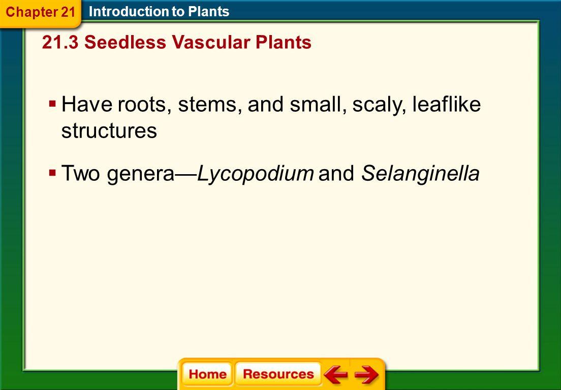 Diversity of Seedless Vascular Plants Division Lycophyta 21.3 Seedless Vascular Plants Introduction to Plants Sporophyte generation of lycophytes is dominant.