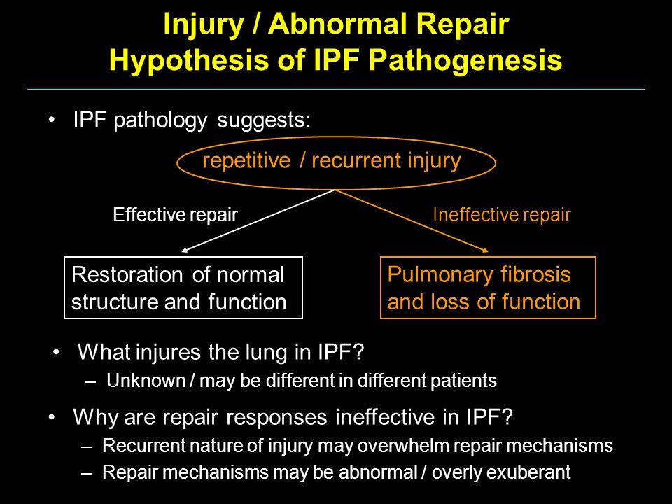 Injury / Abnormal Repair Hypothesis of IPF Pathogenesis Why are repair responses ineffective in IPF? –Recurrent nature of injury may overwhelm repair
