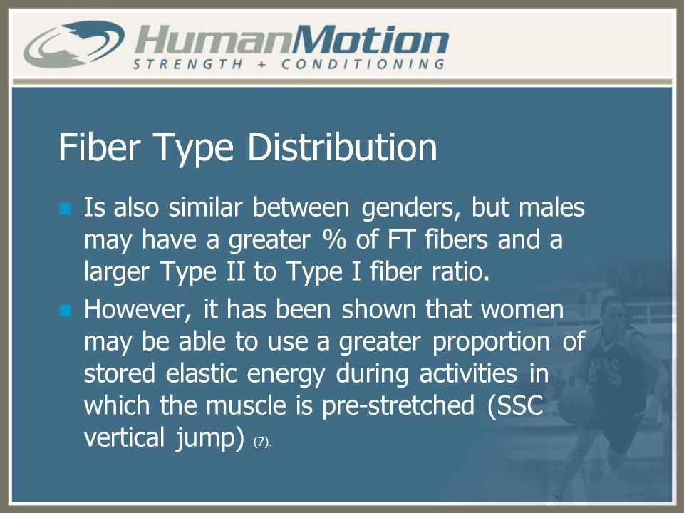 Fiber Type Distribution Is also similar between genders, but males may have a greater % of FT fibers and a larger Type II to Type I fiber ratio. Howev