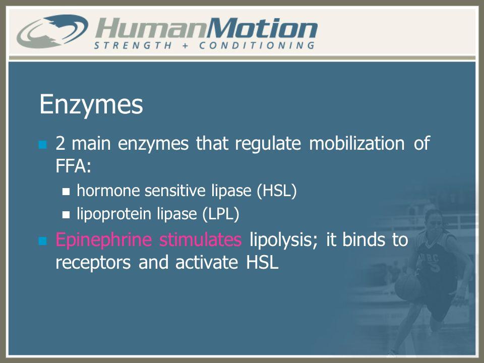 Enzymes 2 main enzymes that regulate mobilization of FFA: hormone sensitive lipase (HSL) lipoprotein lipase (LPL) Epinephrine stimulates lipolysis; it