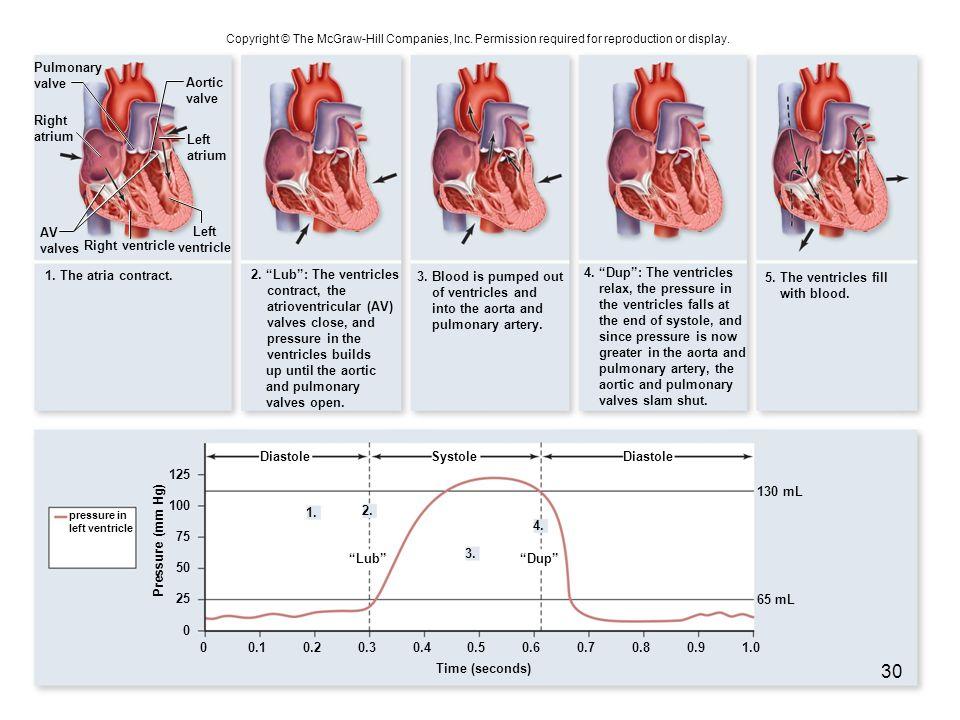 Right ventricle 1. The atria contract. Diastole Lub 1. 2. 3. 4. Dup DiastoleSystole Pressure (mm Hg) 0 25 0.101.00.90.80.60.70.50.40.30.2 50 75 100 12