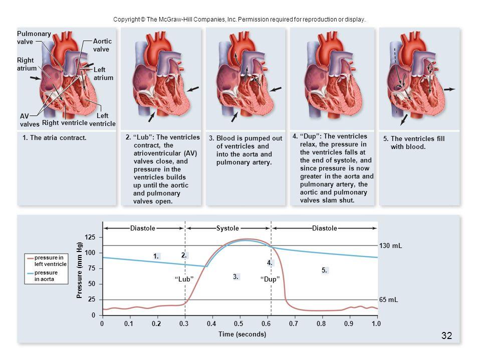 Right ventricle 1. The atria contract. Diastole Lub 1. 2. 3. 4. 5. Dup DiastoleSystole Pressure (mm Hg) 0 25 0.101.00.90.80.60.70.50.40.30.2 50 75 100