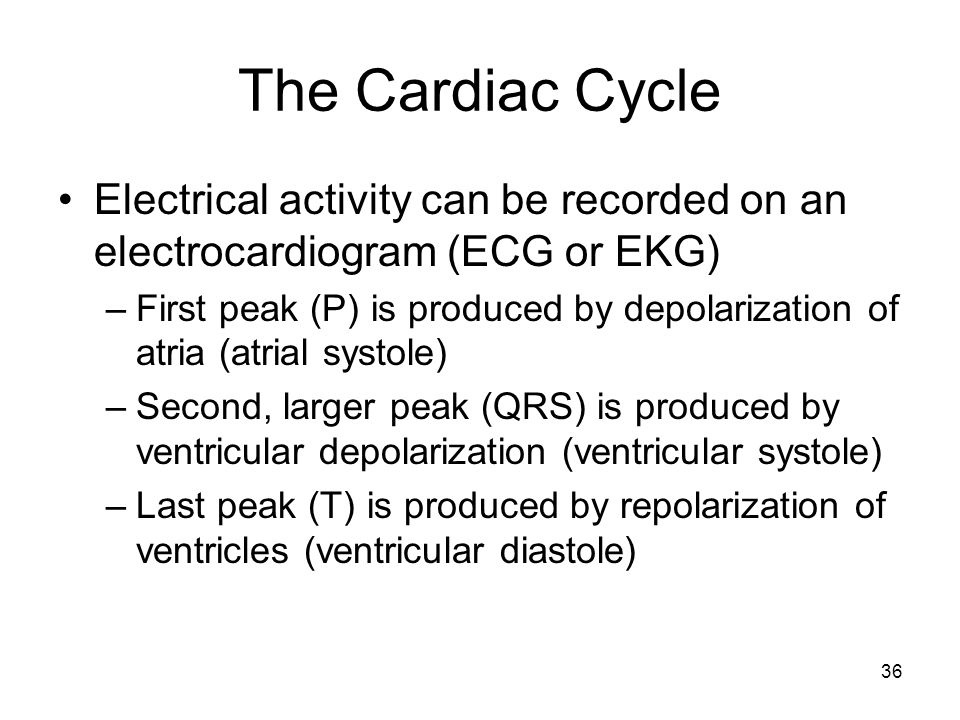 The Cardiac Cycle Electrical activity can be recorded on an electrocardiogram (ECG or EKG) –First peak (P) is produced by depolarization of atria (atr