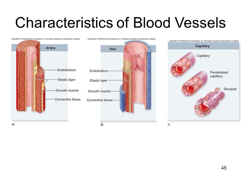 45 Characteristics of Blood Vessels