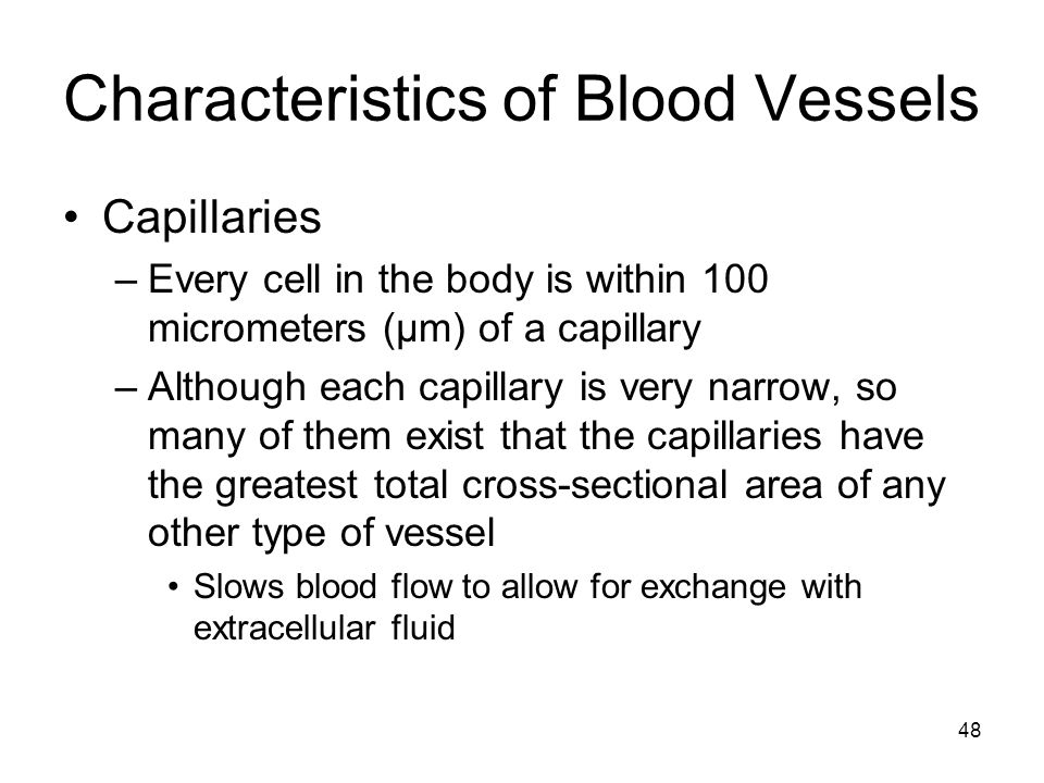 Characteristics of Blood Vessels Capillaries –Every cell in the body is within 100 micrometers (μm) of a capillary –Although each capillary is very na