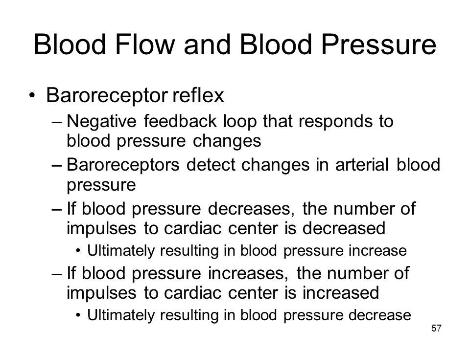 Blood Flow and Blood Pressure Baroreceptor reflex –Negative feedback loop that responds to blood pressure changes –Baroreceptors detect changes in art