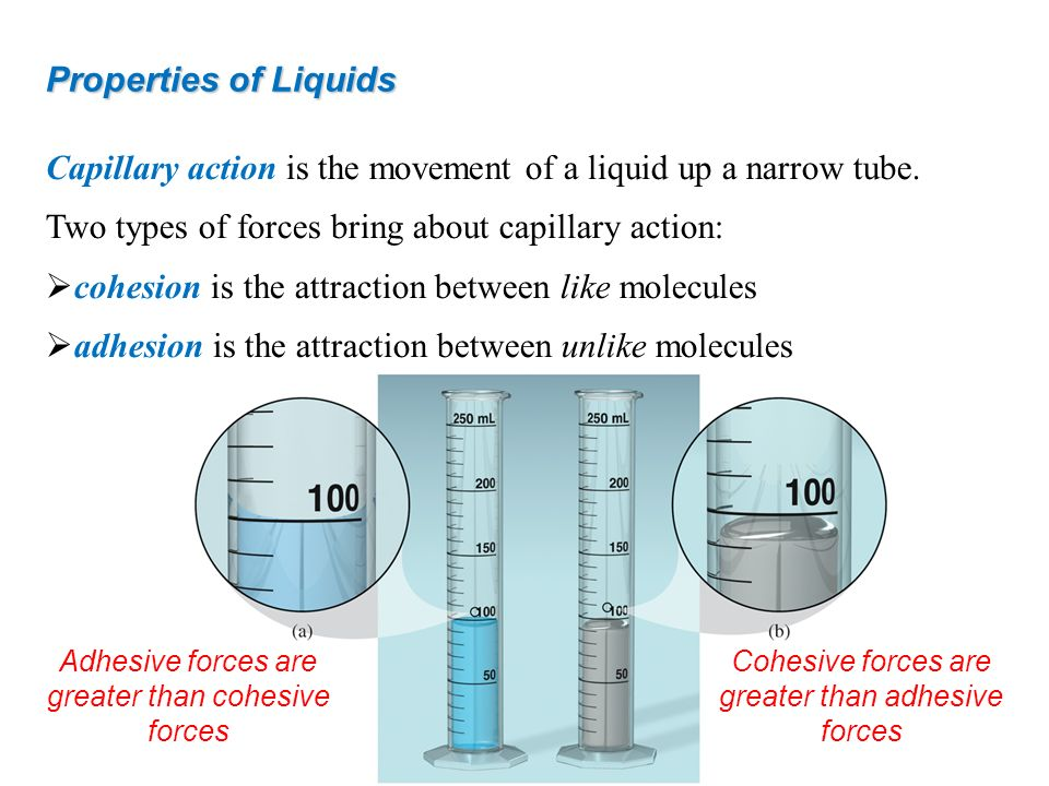 Capillary action is the movement of a liquid up a narrow tube. Two types of forces bring about capillary action: cohesion is the attraction between li