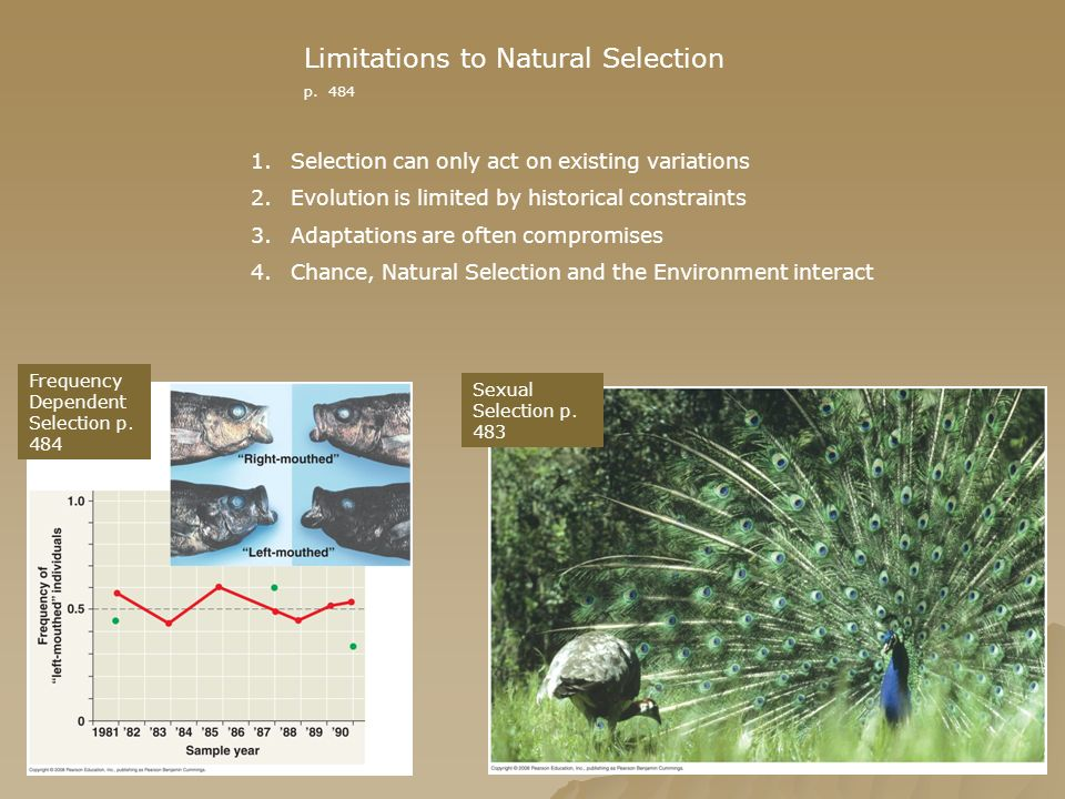 Limitations to Natural Selection p. 484 Frequency Dependent Selection p. 484 Sexual Selection p. 483 1.Selection can only act on existing variations 2