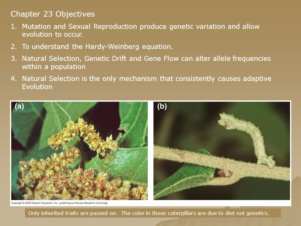 Chapter 23 Objectives 1.Mutation and Sexual Reproduction produce genetic variation and allow evolution to occur. 2.To understand the Hardy-Weinberg eq