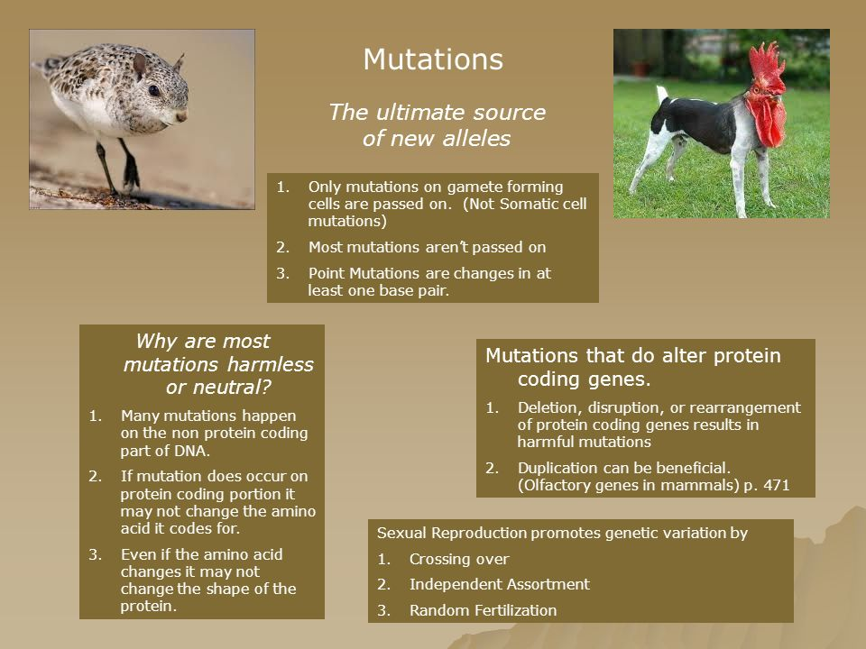 Mutations The ultimate source of new alleles 1.Only mutations on gamete forming cells are passed on. (Not Somatic cell mutations) 2.Most mutations are
