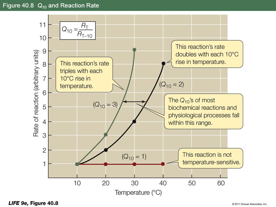 Figure 40.8 Q 10 and Reaction Rate