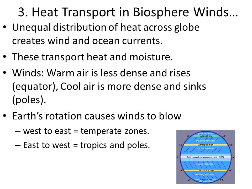 3. Heat Transport in Biosphere Winds… Unequal distribution of heat across globe creates wind and ocean currents. These transport heat and moisture. Wi