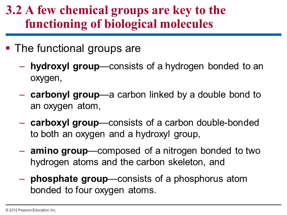 3.2 A few chemical groups are key to the functioning of biological molecules The functional groups are –hydroxyl groupconsists of a hydrogen bonded to
