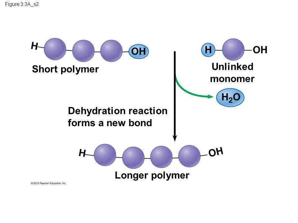Figure 3.3A_s2 Short polymer Unlinked monomer Dehydration reaction forms a new bond Longer polymer