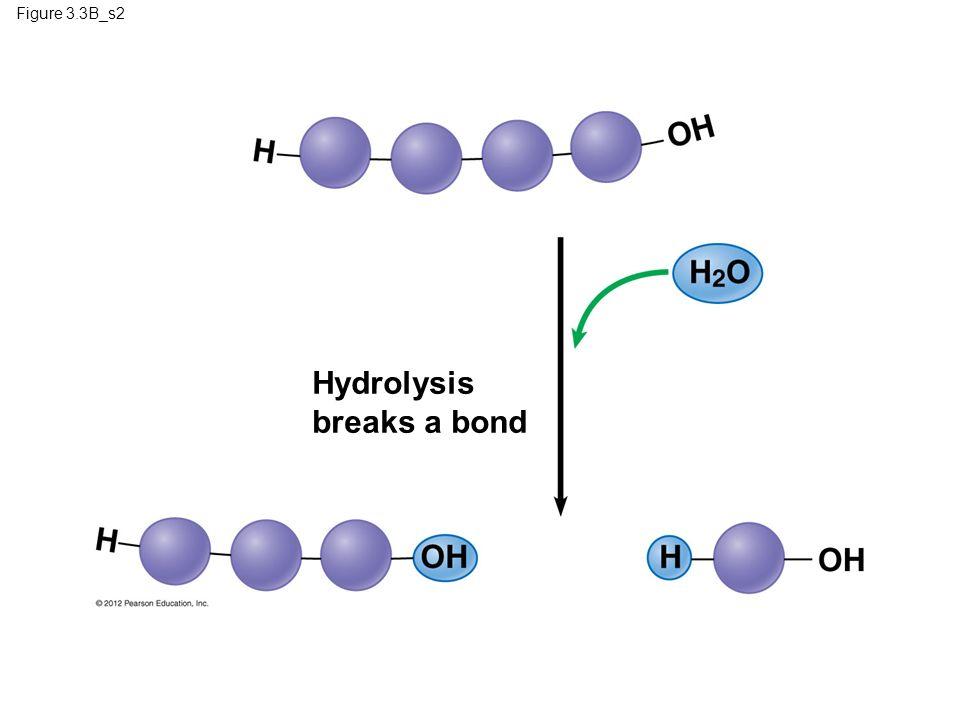 Figure 3.3B_s2 Hydrolysis breaks a bond