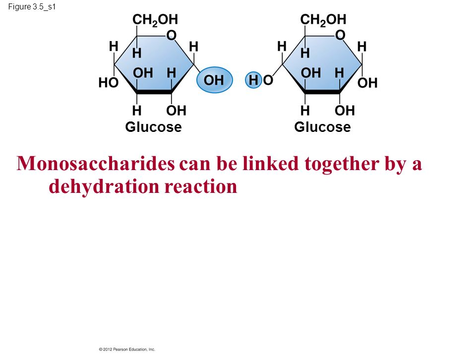 Figure 3.5_s1 Glucose Monosaccharides can be linked together by a dehydration reaction