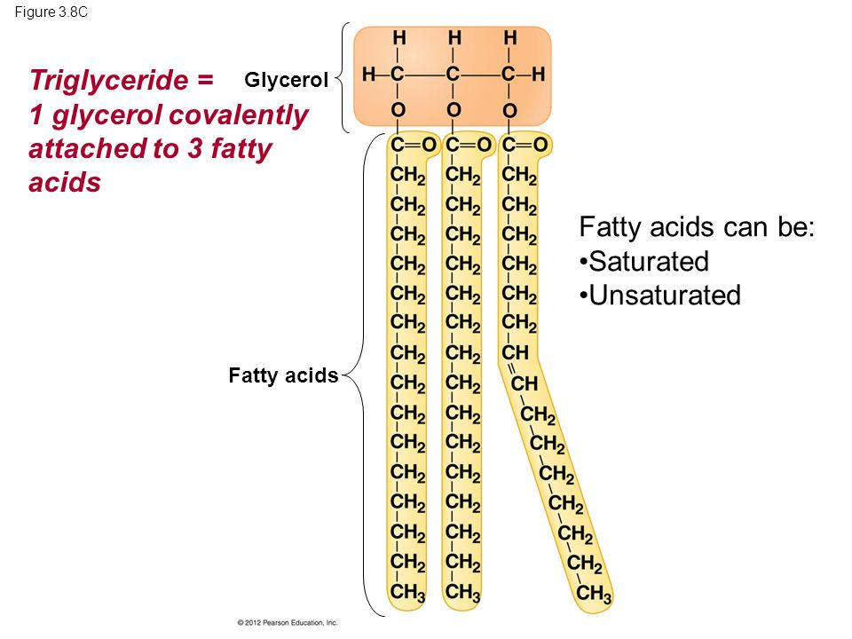 Figure 3.8C Fatty acids Glycerol Triglyceride = 1 glycerol covalently attached to 3 fatty acids Fatty acids can be: Saturated Unsaturated