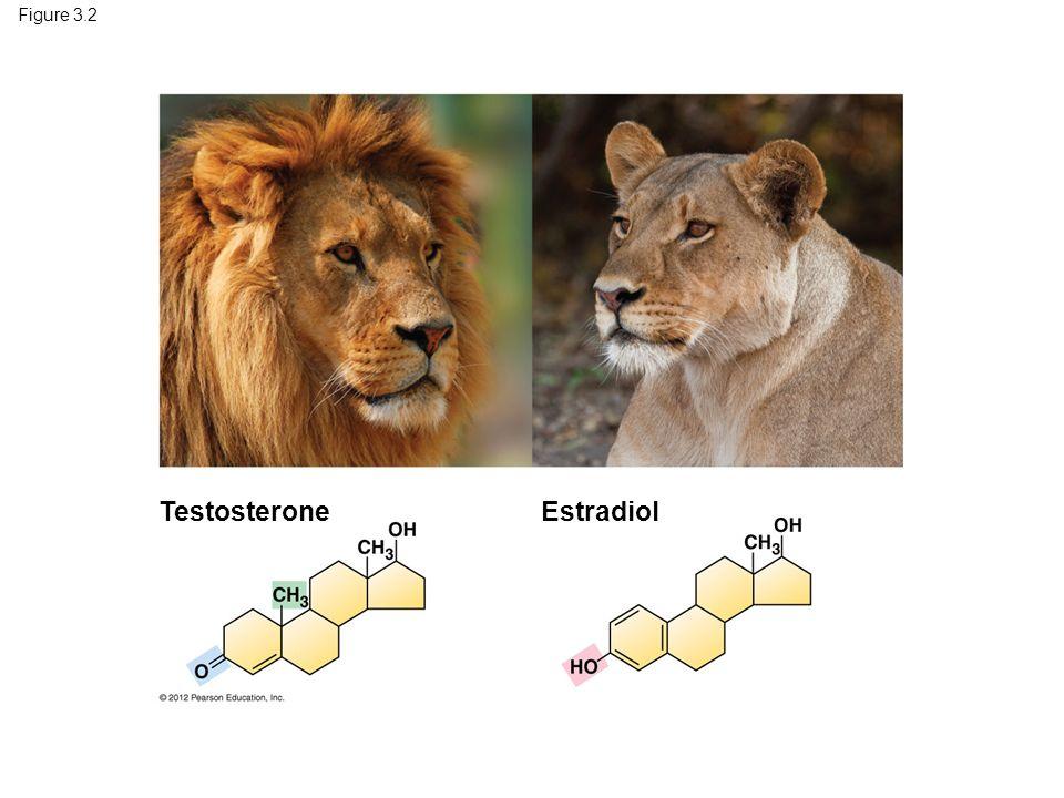 Figure 3.2 TestosteroneEstradiol