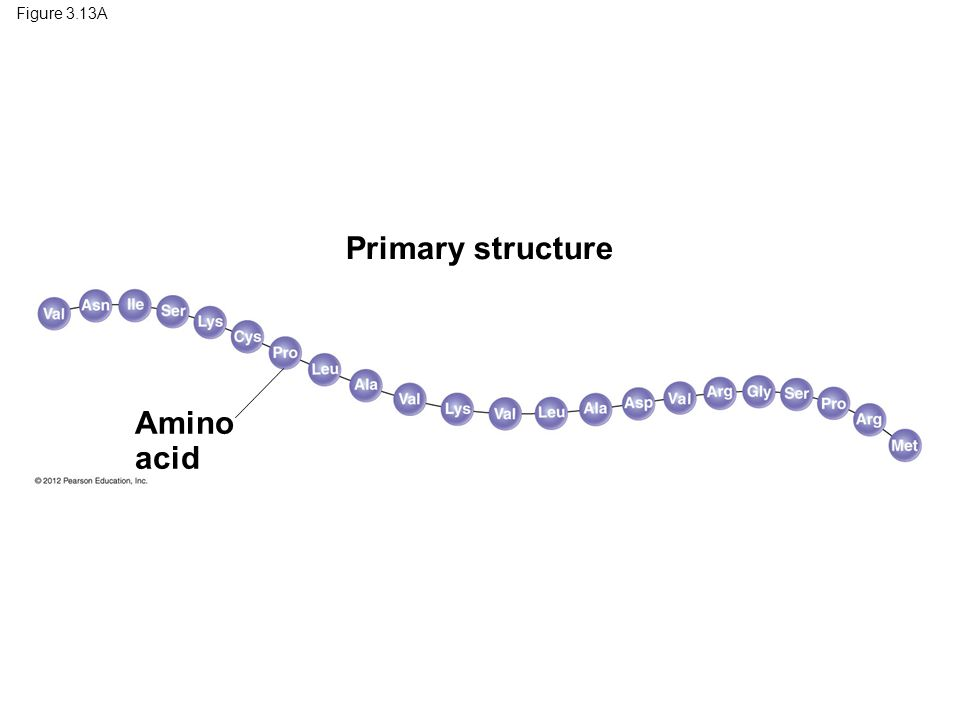 Figure 3.13A Primary structure Amino acid