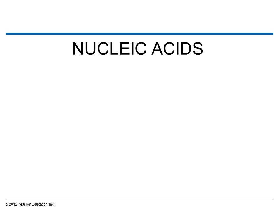 NUCLEIC ACIDS © 2012 Pearson Education, Inc.